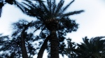 Antalya - în parc