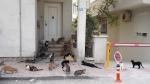 Casa pisicilor